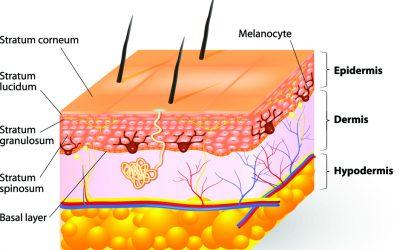 How Vesiderm Yolk Lecithin Liposomes gives you healthy skin?