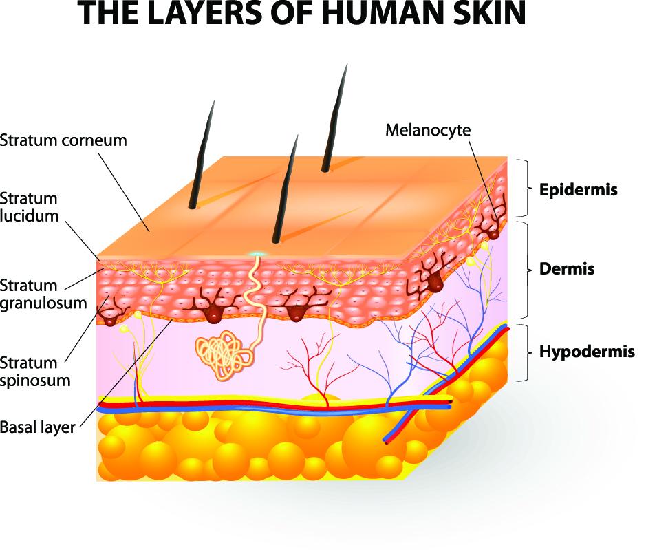 How Vesiderm Yolk Lecithin Liposomes gives you healthy skin? 1